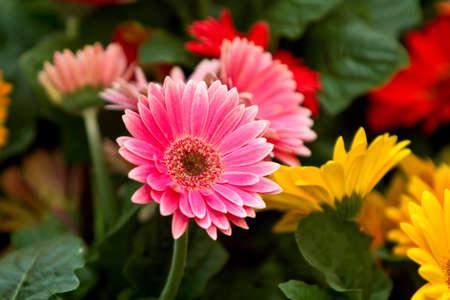 Frühlingsblumen Standard-Bild - 10271183