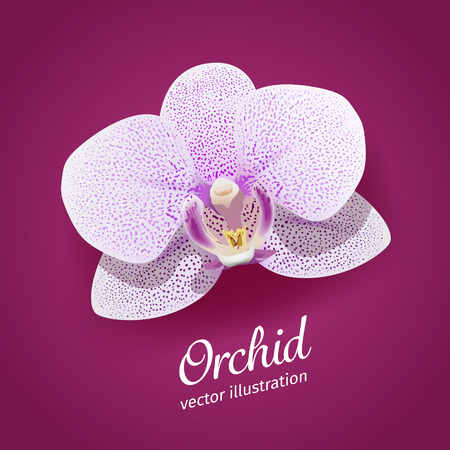 white orchids: Orchid flower vector illustration. EPS 10 file