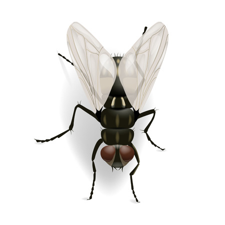 macro: Fly on the wall vector illustration isolated on the white background. EPS 10 file