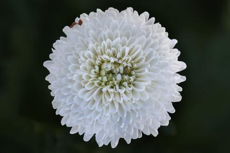 big flower: Open white big flower in macro