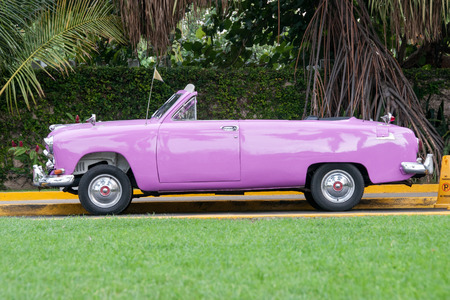 purple car: Old purple car parked in the green garden - Havana, Cuba