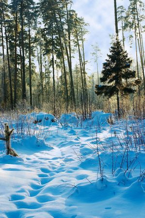 winter landscape in the forest Stock Photo - 301753