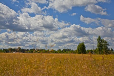 field of wheat under blue sky with clouds on it Stock Photo - 895105