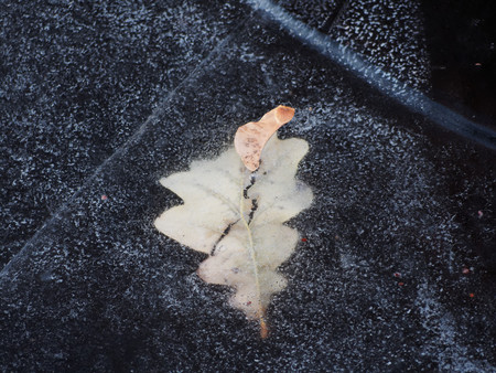 Oak leaf frozen in the ice of the river. Leaf in the ice. Beautiful winter photograph of oak leaf. Фото со стока