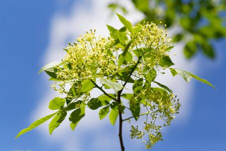 Early spring. Tree branch against blue sky. Green flowers. Standard-Bild - 124959771
