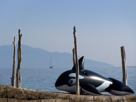 Inflatable Orca Whale resting near sea