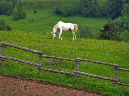 hill of tara: White horse in mountain field Stock Photo