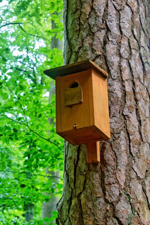 Wooden bird house (nestbox) on a tree Banque d'images
