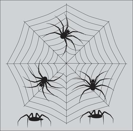 クモの節足動物のクモ抽象的な白黒イメージ