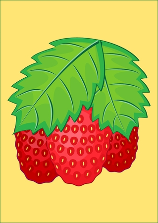 STRAWBERRY Garden plant of the genus strawberry with small sweet berries Çizim