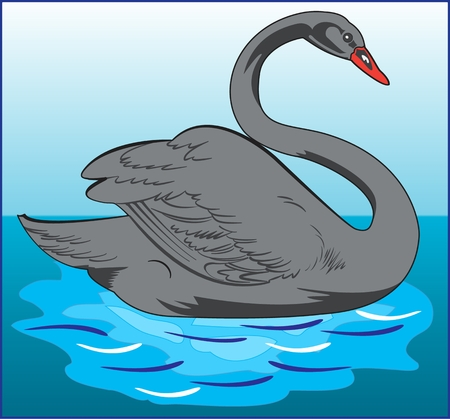 SWAN WATER BIRD color vector image of a swan - waterfowl large long-necked