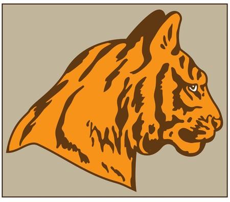 HEAD OF TIGER color vector image of tiger head predatory animal Çizim