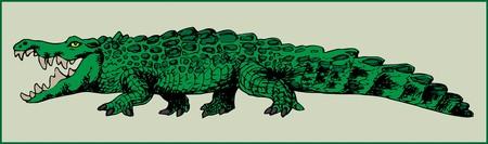 CROCODILE ANIMAL predatory large amphibian with powerful jaws