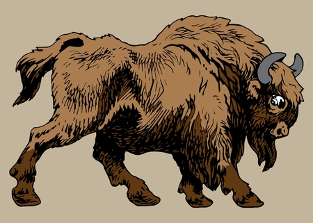 BISON ANIMAL large hoofed mammal of the family of the bulls
