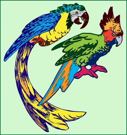 PARROTS BIRDS ON A LIGHT GREEN BACKGROUND color image of two parrots with bright colored plumage