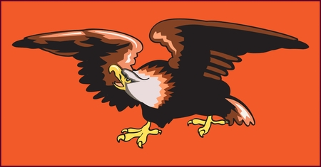 Eagle predatory bird, color image of an eagle a bird predator with a curved beak on an orange background