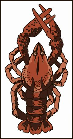 CRAYFISH - AMPHIBIAN ANIMAL color image of arthropod amphibian animal crayfish with large pincers and tail