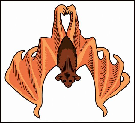 BAT - NIGHT ANIMAL illustration