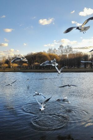 Seagulls fly over the lake and land on the water Imagens