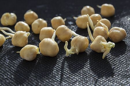 Sprouted chickpeas scattered on a black background