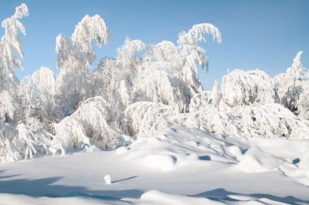 Winter Landscape trees in hoarfrost