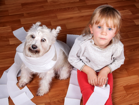 trashed: Naughty child and white schnauzer puppy dog sitting on a floor and playing with  roll of toilet paper Stock Photo