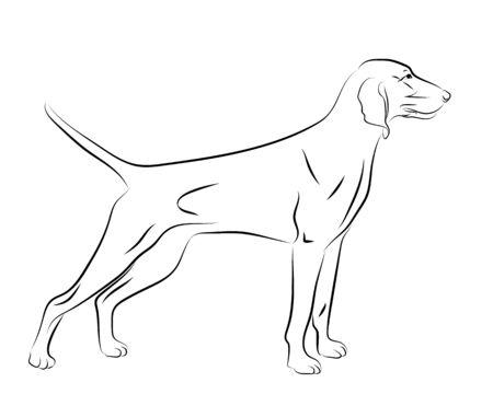 portrait contour outline, sketch, logo of Weimaraner dog hound, silhouette vector illustration