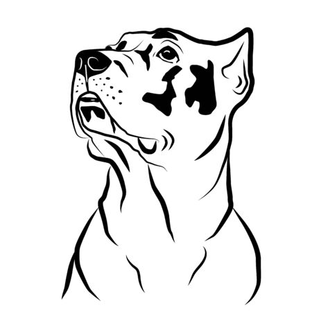 Cane corso dog head portrait . Isolated outlined sketch, logo contour vector illustration