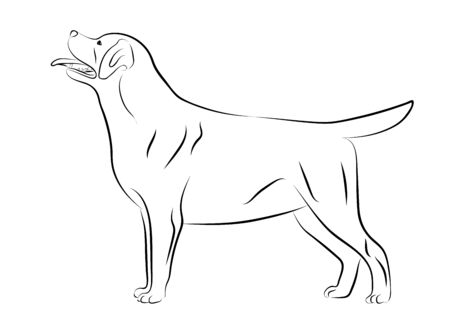 Labrador Retriever dog. Isolated outlined sketch, logo contour vector illustration Ilustrace