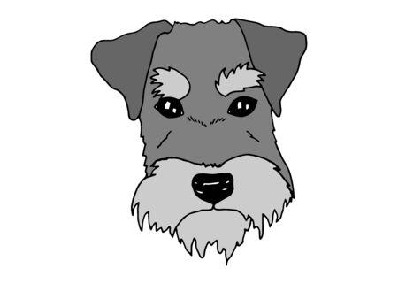 Retrato de perro Schnauzer. Ilustración de vector de doodle dibujado a mano de raza de perro.