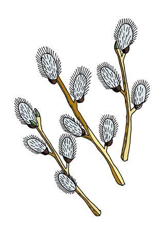 Branches de saule de printemps isolés sur fond blanc. Illustration vectorielle dessinés à la main. Décoration de Pâques