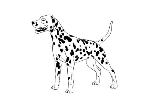 Dalmatian Dog. Vector outline stock illustration realistic lines silhouette.Design element for logo, print,tattoo, coloring book. Logos