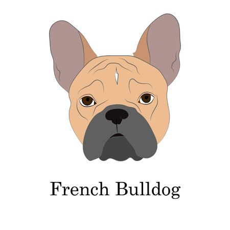 Adorable fawn French Bulldog head portrait. Breed standard. suitable for logo for web site kennel. Realistic vector illustration on white background..