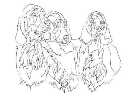 Vector illustration of Irish Setter group dogs breed. For logo branding t-shirt design coloring book catalog dog show.