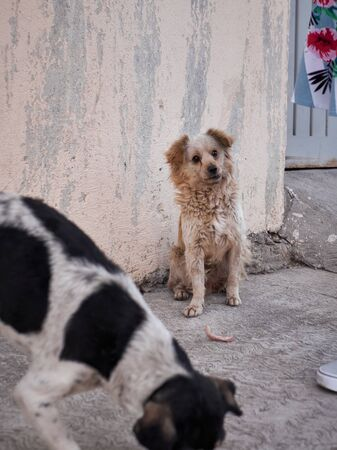 Street dog in Mexico with crooked mouth waits for food