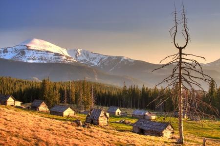 ウクライナのカルパティア山脈で死んだ木と古い家