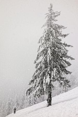 山で雪に覆われたツリーの下のスキーヤー 写真素材