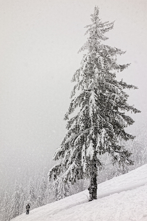 Skier under a snow-covered tree in mountains
