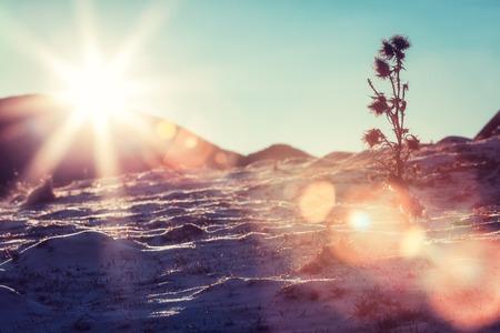 雪の斜面、カルパティア山脈の太陽フレア 写真素材