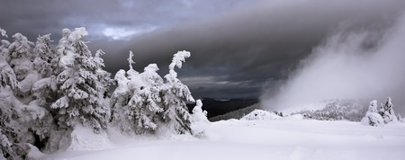 Snow-covered trees and mystical fog in mountains. Panorama.