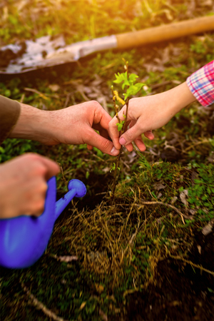 Planting a tree, new life Stock Photo