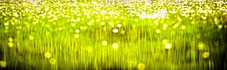 水に映った緑の縞模様の背景 写真素材