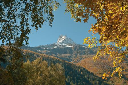 ロッキーの雪をかぶった山の背景に明るい葉します。