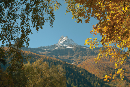 Bright leaves on a background of rocky snow-capped mountains