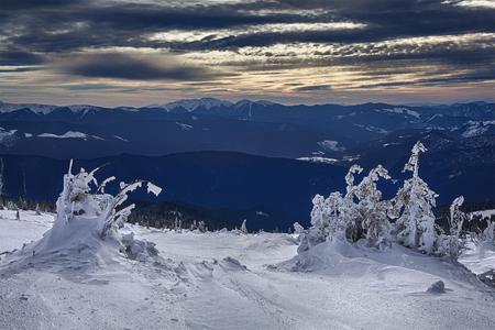 モンテネグロの尾根、ウクライナのカルパチア山脈に凍結の木 写真素材
