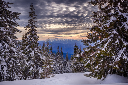 モンテネグロの尾根、ウクライナのカルパチア山脈に新年の木