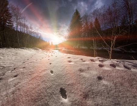 川の近くの雪の上の野生動物の痕跡