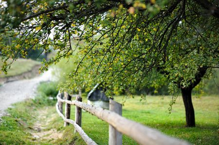 Countryside view: garden  with a fence and a tree Stock Photo - 5654454
