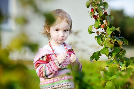 Adorable toddler girl picking raspberries in a garden Stock Photo - 12791866
