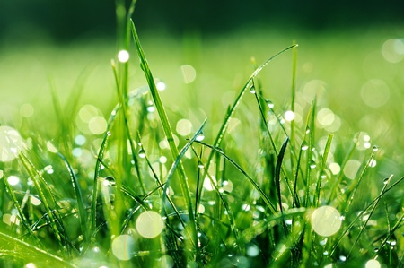 Fresh green grass with water drops Stock Photo